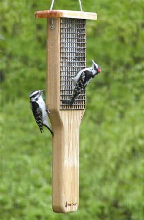 birds choice pileated woodpecker double cake cedar suet