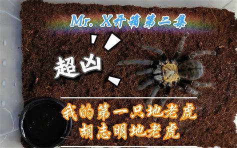【Mr.X开箱第二集】超凶的胡志明地老虎开箱!!!_哔哩哔哩_bilibili