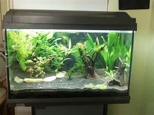 Aquarium Einrichten 60l : mein 60 liter tagebuch seite 2 garnelenforum ~ Michelbontemps.com Haus und Dekorationen