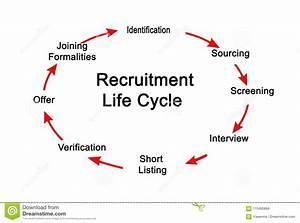 Recruitment Life Cycle Stock Illustration  Illustration Of