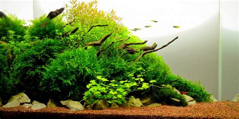 Best Substrate For Aquascaping by Understanding Nature Aquascaping Style The Aquarium Guide