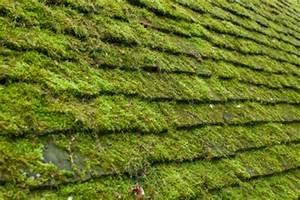 Moos Auf Gartenplatten Entfernen : moos auf dem dach beseitigen so gehen sie vor ~ Michelbontemps.com Haus und Dekorationen