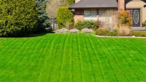best looking lawn grass looking for a luscious lawn here are some great tips to get that lawn of yours in tip top shape