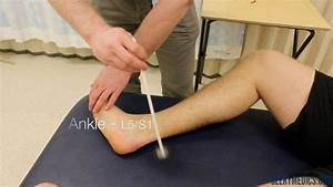 Achilles Reflex Related Keywords & Suggestions - Achilles ...