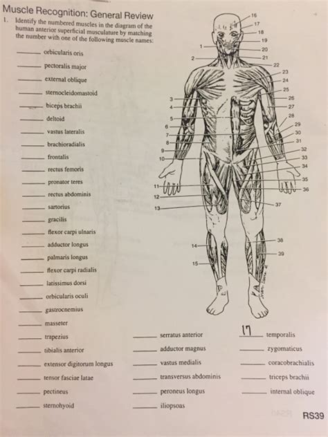 Naming skeletal muscles according to a number of criteria: Solved: Muscle Recognition: General Review Identify The Nu ...