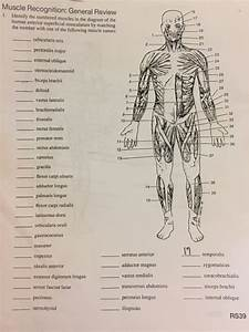 Solved  Muscle Recognition  General Review Identify The Nu