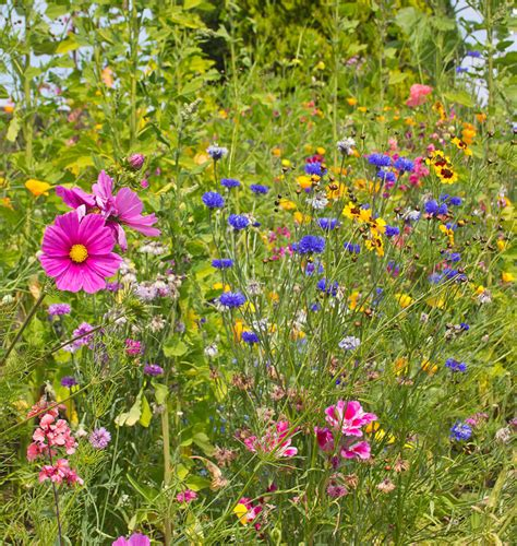 plant flower seeds for bees and pollinators
