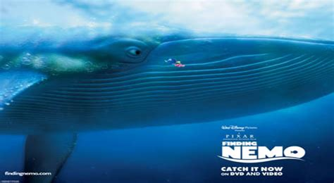 paus biru hewan terbesar  dunia   hidup beritauniknet