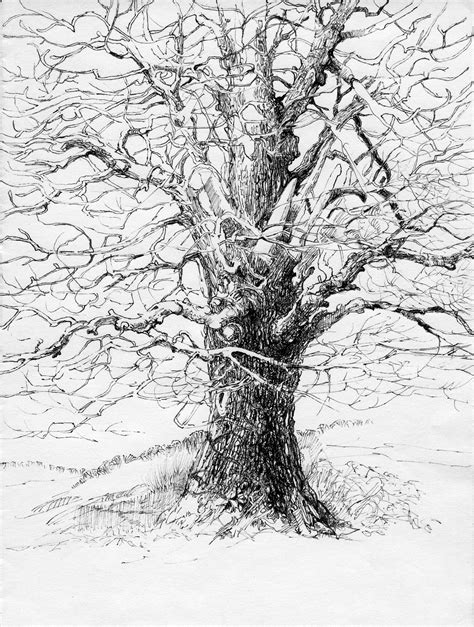 Pencil Drawings Trees with No Leaves