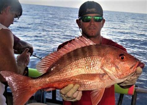 grouper gag snapper seasons ready getting american florida