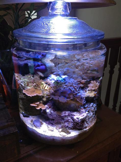rondos reef tanks photo id  full version