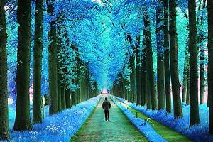 Cool, Hd, Nature, Wallpapers, 42, Wallpapers, U2013, Adorable