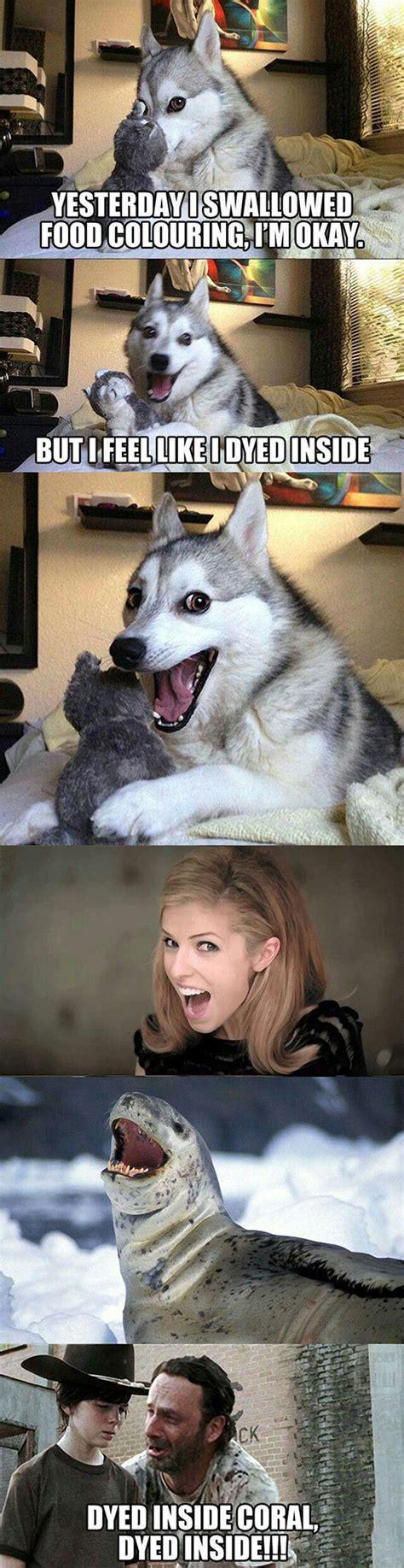 Pun Husky Meme - pun dog