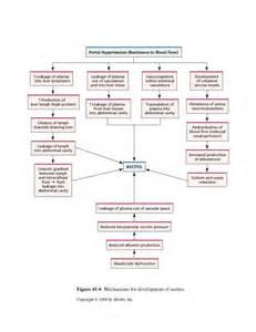 Ascites Pathophysiology