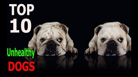 Top 10 Most Unhealthy Dog Breeds Top 10 animals YouTube