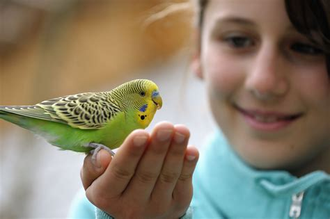 extremely small bathroom ideas taking care of budgies as pets