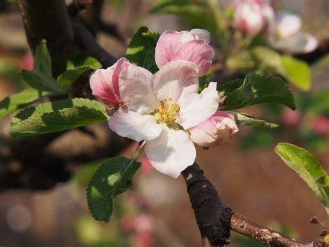 Free Images : branch flower bloom food spring produce