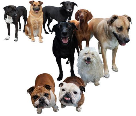 list  synonyms  antonyms   word doggy