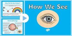 Los 17 Mejores Recursos Educativos De Human Eye Powerpoint