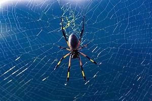 Faire Fuir Les Araignées : comment une araign e fabrique sa toile ~ Melissatoandfro.com Idées de Décoration