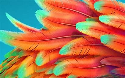 Rainbow Background Pattern Bird Papers 4k Desktop
