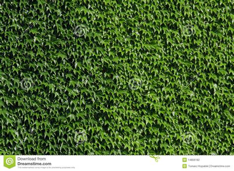 green wall stock photography image