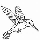 Hummingbird Coloring Pages Bird Printable Humming Flowers Getcoloringpages sketch template