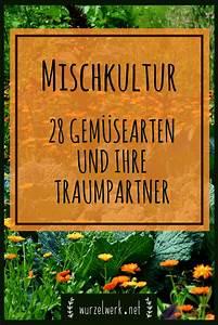 Mischkultur Im Garten : mischkultur im gem segarten 28 wirksame mischkultur ~ Watch28wear.com Haus und Dekorationen