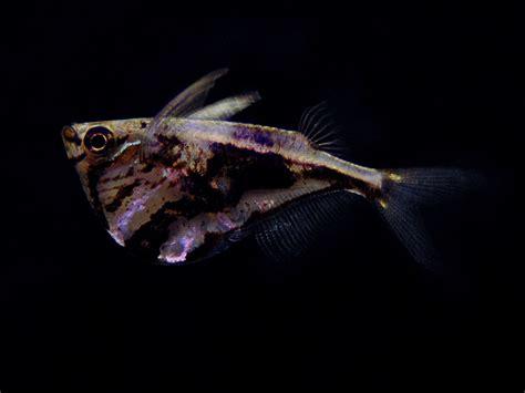 names  fish species beginning
