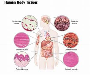 31 Best Anatomy And Physiology Images On Pinterest