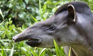 walking dead  amazons endangered species