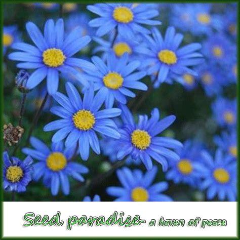 perennial flower seeds for sale k k club 2016