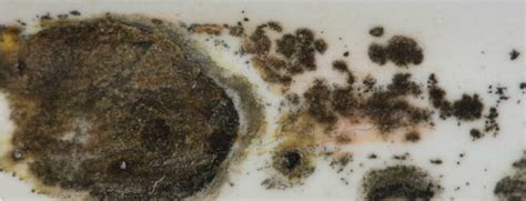 Black Mold Growing in the Bathroom? Here's What to Do