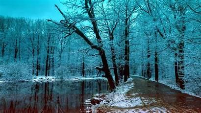 Forest Winter Night Wallpapers Ice Dark Snow