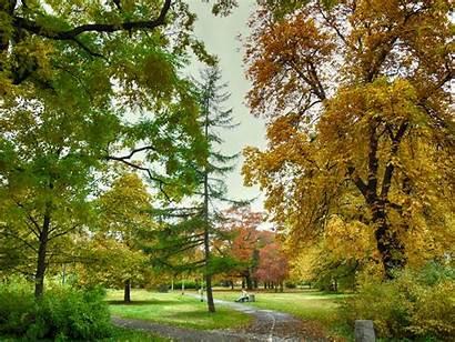 Pohon Warna Rumput Taman Matahari Awan Menanam
