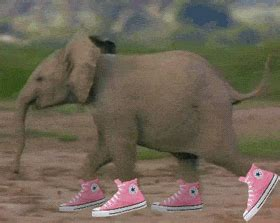 funny animals gifs find share  giphy