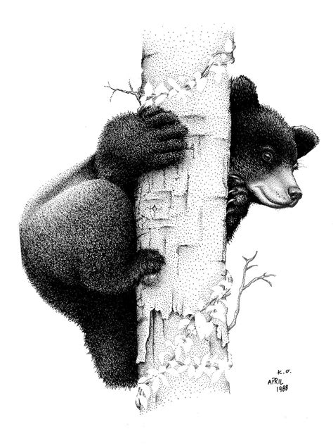 Learn how to tell the difference between a black bear and a grizzly. Description from pinterest