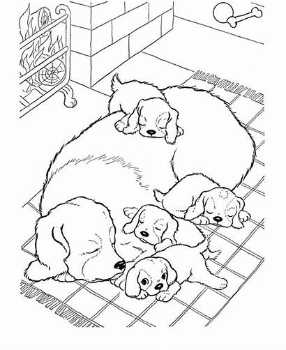 Coloring Puppy Golden Retriever Printable Dog Puppies