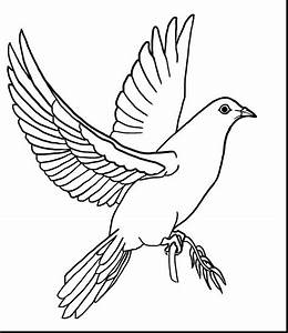 Mourning Dove clipart line drawing - Pencil and in color ...