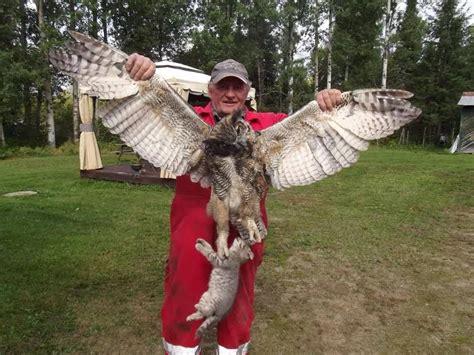 do barn owls eat cats