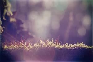 Free Wallpaper - lit moss by blendstufe on DeviantArt
