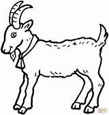 Coloring Goat Pages Billy Printable Drawing Three Goats Colouring Kozy sketch template