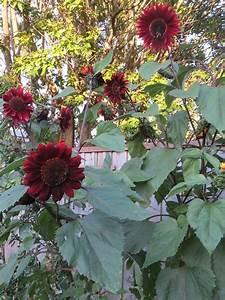 Pin By Garden Guru On Backyard Gardening
