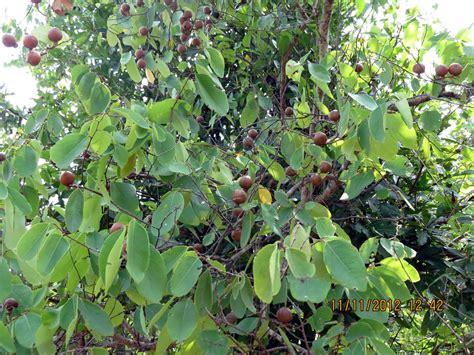 poisonous plants medicinal plants of nellore district and poisonous plants around us poisonous plants around us