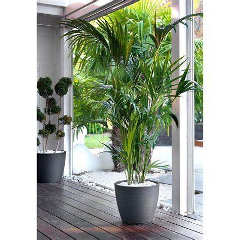 vasi per piante grandi vaso design per esterno e giardino in resina