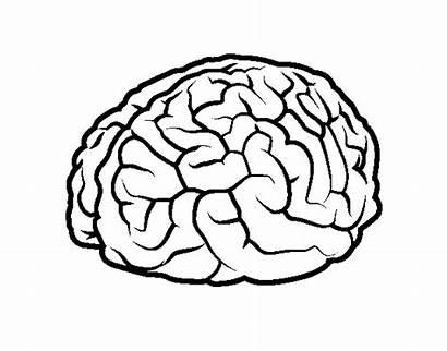 Brain Coloring Human Coloringcrew