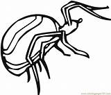 Spiders Crokky Coloringpages101 sketch template