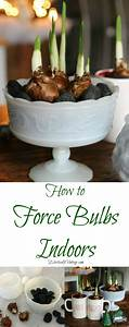 How To Force Bulbs Indoors
