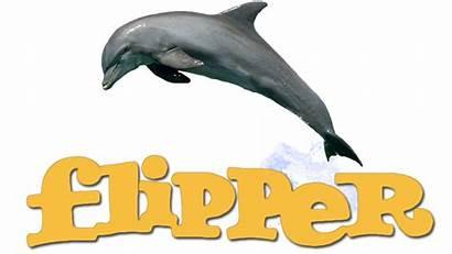 Flipper Clipart Dolphins Transparent Fanart Webstockreview
