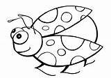 Ladybug Coloring Pages sketch template